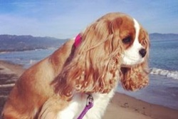 pet resort and dog boarding in santa barbara california
