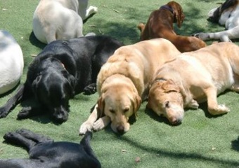 pet resort and day care in santa barbara